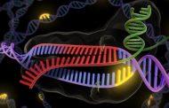 Estados Unidos se lanza a competir con China en la carrera por la modificación genética de seres humanos