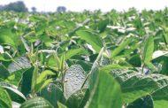 Las mentiras de la patronal del agro: los responsables de las inundaciones: la pampa húmeda asfaltada por soja