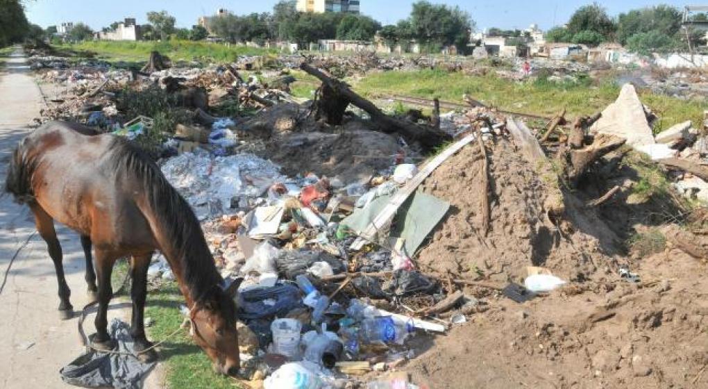 En la provincia de Buenos Aires los caballos tendrán DNI con microchips pero los humanos viven tapados por la basura