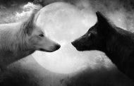 """Rusia 2018: """"No importa que haya lobos que quieran comprar la sangre y se apoderen de la alegría y la felicidad del hombre"""""""