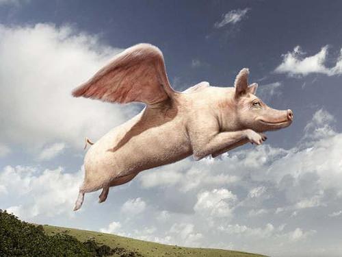 Aquí decimos el día que las vacas vuelen, pero en Washington insisten con la teoría de los chanchos voladores