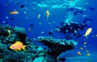 Los océanos, ¿qué les afecta y cómo protegerlos?
