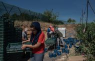 Las inmigrantes marroquíes explotadas en España seguro que no cantan Strawberry Fields Forever