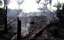 El capitalismo de sojeros, de trasnacionales de la agroindustria y de la minería son los incendiarios del Amazonas
