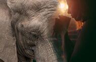 Una elefanta y un café
