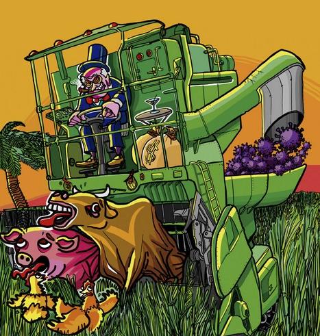 ¿Por qué comer es un lujo?…Entre otras cosas, porque el imperio cibernético devora la producción alimentaria
