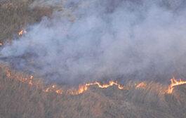 Humo sobre el agua: los incendios forestales en el humedal del Delta Bonaerense
